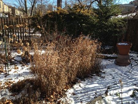 Winter Gardening Pissarro